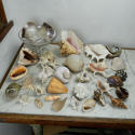 Shell Collection - picture 1