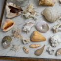 Shell Collection - picture 5