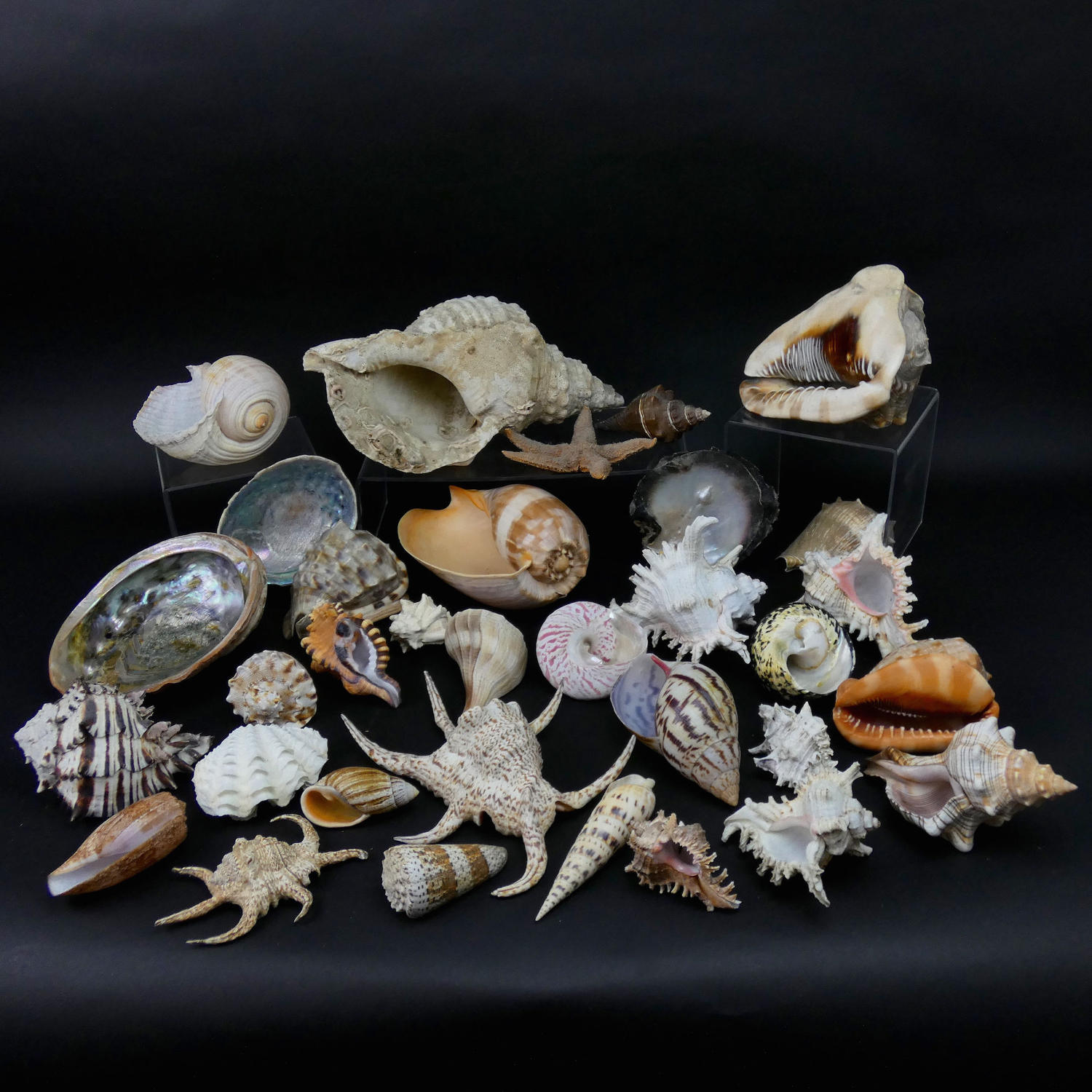 Collection of Shells.